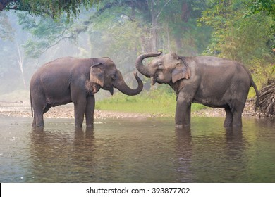 Asian Elephant in a natural river at deep forest, Thailand