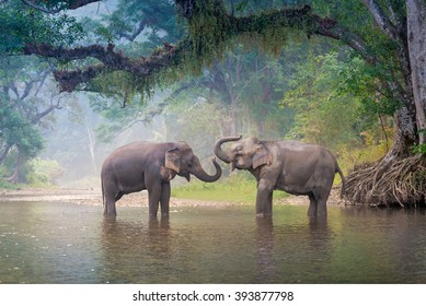 Asian Elephant in a nature river at deep forest in Thailand