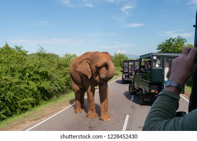 Asian elephant out on the road and interferes with the movement. Sri lanka. Yala National Park. October 2018.