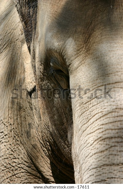 An asian elephant at the San Diego Zoo