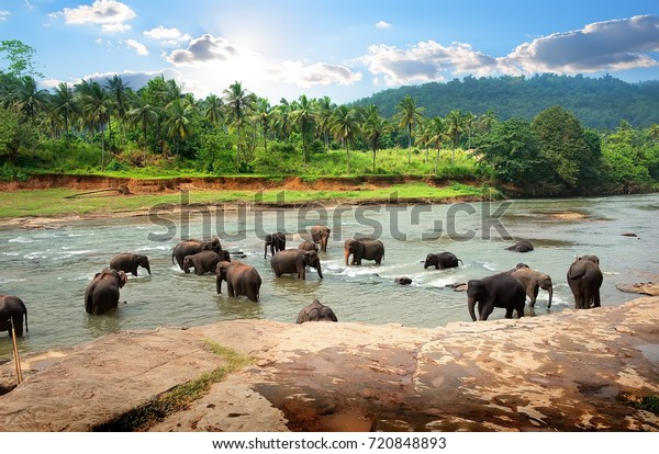 Asian elephants in the park of sunshine