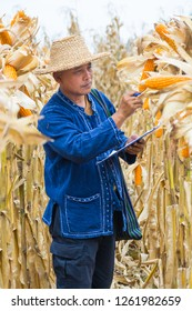 Asian Farmer or Biologist inspect Check or Analyze and Research Raw Corn Cob on Plant in Cornfield as Agricultural Researching or Farming as Agroindustry Concept.