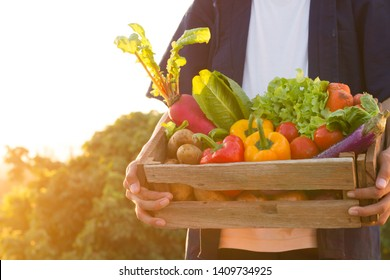 Asian farmer carry full basket of organic product, Green vegetable and fruit standing sunset background.