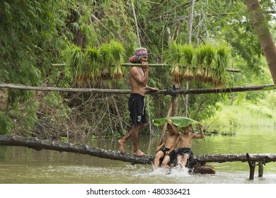 Asian farmer carry seedlings on wooden bridge,Asian kids playing water on the wood bridge