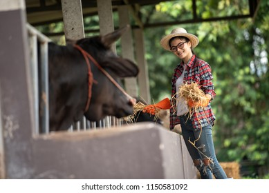 Asian farmer girl smiling veterinary technician feeding cows in farm