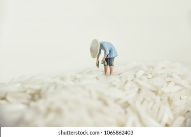 Asian farmer harvesting rice.