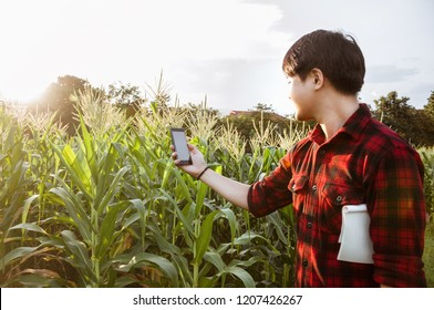 Asian farmer holding smartphone while detecting his crops in corn field, Innovation technology for smart farm system, Agriculture management, Digital agriculture
