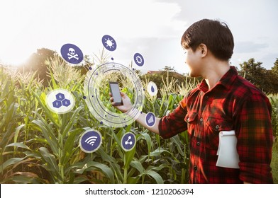 Asian farmer holding smartphone while detecting his crops in corn field, Innovation technology for smart farm system, Agriculture management