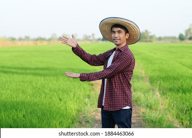 Asian farmer man standing and raise up hand point to side at green rice farm