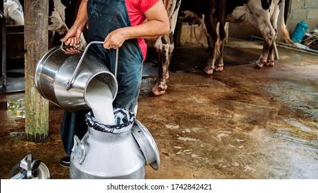 Granjero asiático vertiendo leche fresca de un contenedor de leche batida puede entrar en otro. Granja lechera local en Tailandia