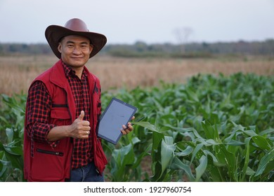 Asian farmer is surveying the growth and disease of organic corns plants in garden Show thumb up and use digital smart tablet to record Concept research and study for agricultural problem. Agronomist.