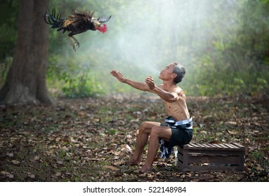 Asian farmer training his fighting cock by water