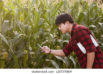 Asian farmer using smartphone for detecting his crops while working in cornfield, Innovation technology for smart farm system, Agriculture management, Digital agriculture