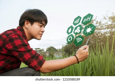 Asian farmer using smartphone for detecting his crops while working in cornfield, Innovation technology for smart farm system, Agriculture management