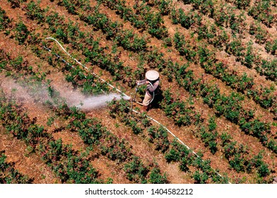 Asian Farmer watering rose plantation in countryside of Dalat city - Vietnam. Aerial view shot on sunny day
