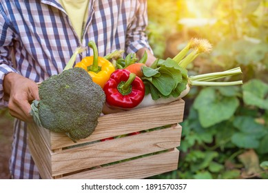 Asian Farmer woman holding wooden box full of fresh raw vegetables (bell peppers, carrots, broccoli, radish, baby corn, green peas and sweet peas ) in the hands.Concept of biological, bio products,
