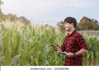 Asian farmer working in cornfield with smartphone, Innovation technology for smart farm system, Agriculture management
