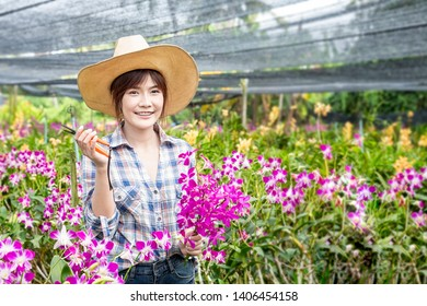 Asian farmers. Happy Female farmers are harvesting orchid flowers for sale. Beautiful woman working in the orchid farm. Purple orchid in garden of thailand.