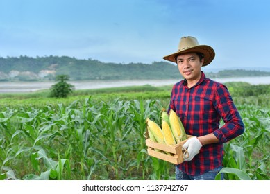 Asian farmers hold corn in wooden boxes in rice fields.