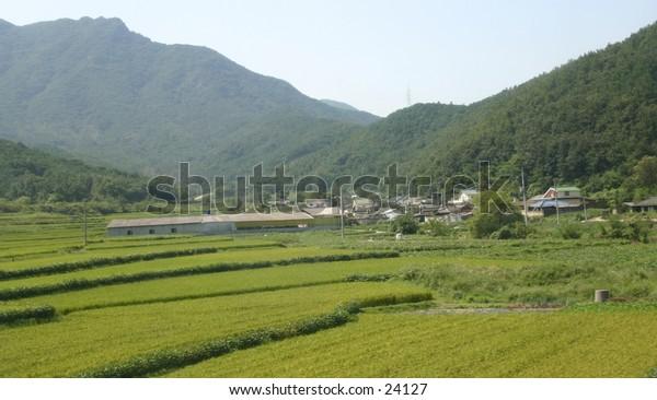 Asian farms