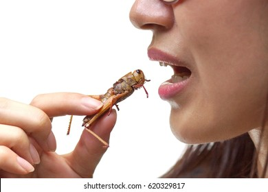 Asian female eating fried locust - Eating insect concept