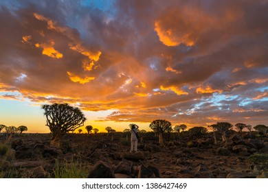 Asian female photographer Quiver Trees Forest at sunset twilight sky scene in Keetmanshoop, Namibia.