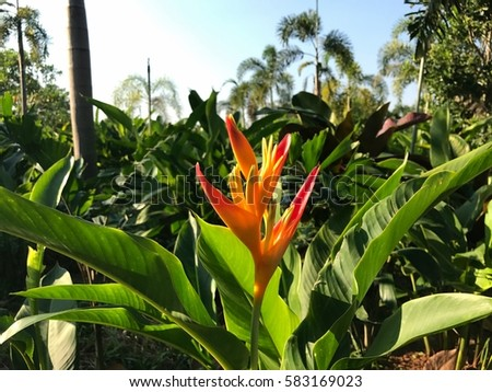Asian Flower Tree Farm East Thailand Stock Photo Edit Now