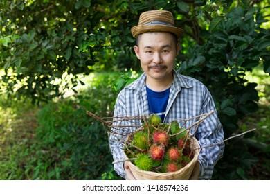 asian gardener man harvest organic rambutan fruit in organic farm, asian farmer holding fruit basket with hand, thai fruit export