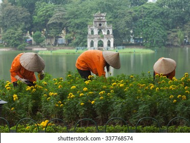 Asian gardener taking care of an yellow botany garden on the bank of Hoan Kiem (Sword) lake and Turtle Tower on a small island behind.