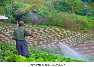 The asian gardener watering the vegetable at organic farm on the hill