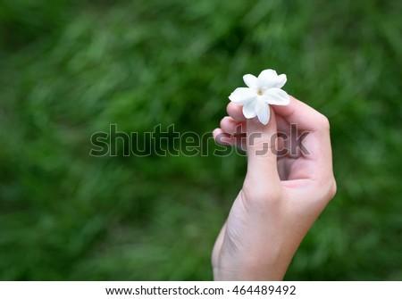 Picture white jasmine asian 4