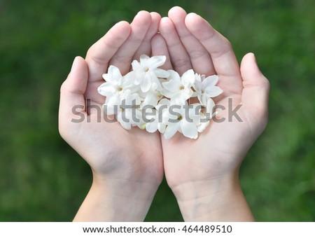 Asian Girl Hands Holding White Jasmine Stock Photo Edit Now