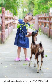 Asian girls feeding young goats