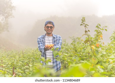 Asian guy smiling, standing in cape gooseberry farm garden (Physalis Peruviana or Physalis angular), holding cape gooseberry fruits in hands. Gardener or farmer lifestyle