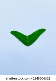 It's an Asian herbs call butterfly leaf. In Malaysian the leaf known as daun rerama or daun rama-rama