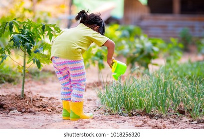 Asian kid watering to vegetable plant in organic farm