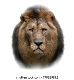 asian lion head isolated on white background
