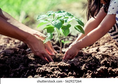 Asian little child girl helping her father to plant the young tree in the garden as save world concept