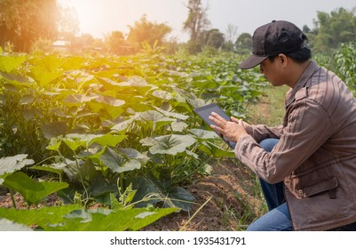 An Asian male farmer is checking his produce with modern technology.