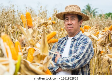 Asian Male Farmer Stand and Smile in Sweet Corn Cob Nature Field or Farm as Agriculture Lifestyle Concept.