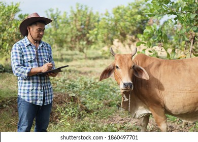 Asian male vet is observing and recording information about cow in Thailand. Concept for study and research through  smart digital device technology. Animal farm, Agriculture development. zoology