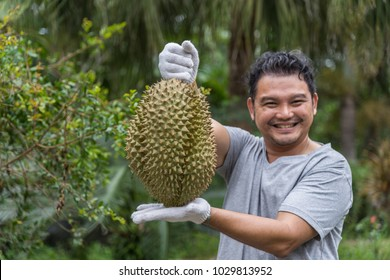 Asian man farmer holding Durian is a king of fruit in Thailand and asia fruit have a spikes shell and sweet can buy at Thai street food and fruit market at agriculture farm