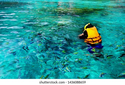 Asian man in orange life jacket with diving mask is snorkeling among many Indo-Pacific sergeant fish on Andaman Sea, Krabi, Thailand with Left copy space - Sport, Activity, Beauty of Nature and Travel