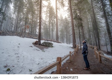 Asian man tourist and photographer walking in the forest while snowing in in Mariposa Grove, located in Yosemite National Park, California. USA. Travel natural attraction in winter season.