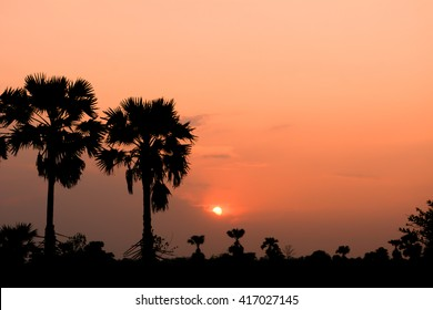 Asian Palmyra palm silhouette sunset background.
