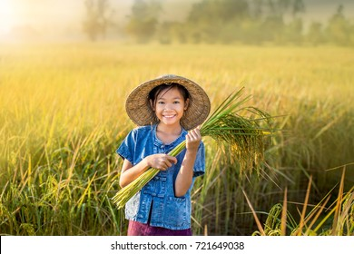 Asian Peasant girl holding rice plant on yellow rice field.