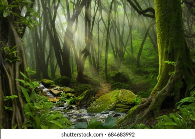 Royalty Free Rain Forest Images Stock Photos Vectors Shutterstock