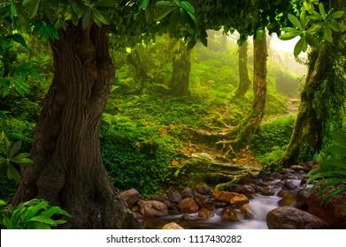 Asian rain forest jungle