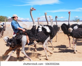 Asian is riding ostrich at south africa with blue sky background