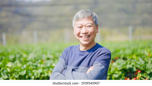asian senior agronomist is smiling at you with crossed arm in strawberry greenhouse